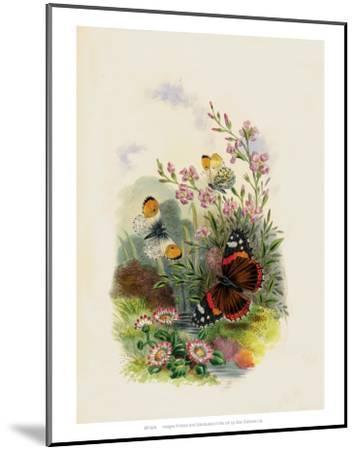 Butterflies and Moths, no. 4--Mounted Art Print