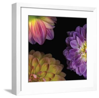 Purple Dahlia I-Pip Bloomfield-Framed Art Print