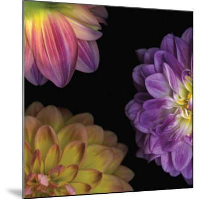 Purple Dahlia I-Pip Bloomfield-Mounted Art Print