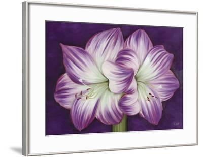 Amaryllis Amour-Kaye Lake-Framed Art Print