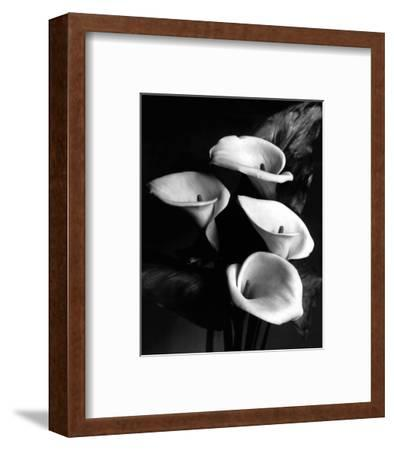 Four Lilies--Framed Premium Giclee Print