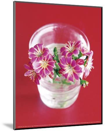 Pink Flowers On Red-Amelie Vuillon-Mounted Art Print
