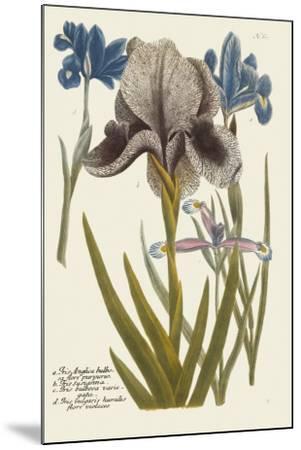 Iris Resplendant IV-Joseph Weinmann-Mounted Art Print