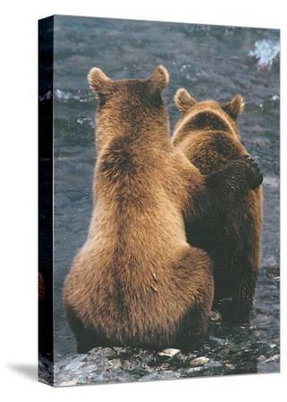 Two Bear Cubs-Art Wolfe-Stretched Canvas Print