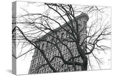 Flatiron with Tree-Erin Clark-Stretched Canvas Print