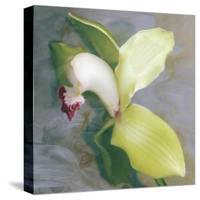 Tropicale-Erin Clark-Stretched Canvas Print