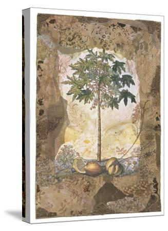 Lace and Papaya-David Hewitt-Stretched Canvas Print