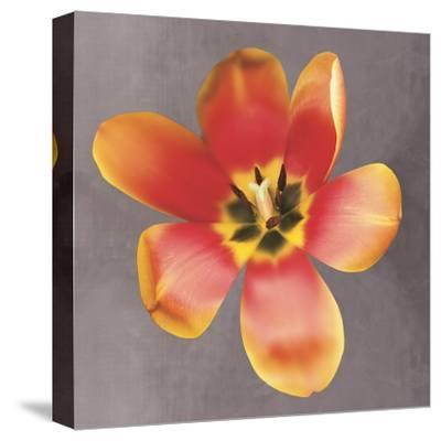 Sunshine Tulip-Erin Clark-Stretched Canvas Print