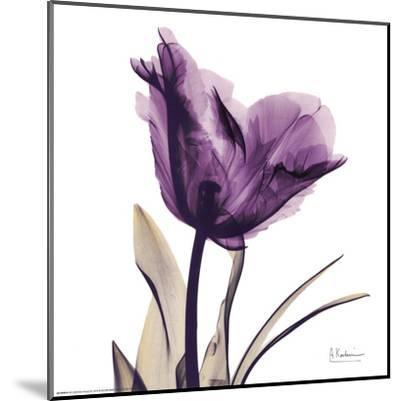 Royal Purple Parrot Tulip-Albert Koetsier-Mounted Art Print