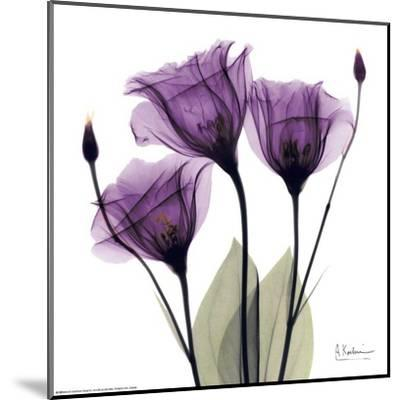 Royal Purple Gentian Trio-Albert Koetsier-Mounted Art Print