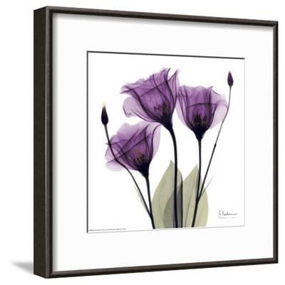 Royal Purple Gentian Trio-Albert Koetsier-Framed Art Print