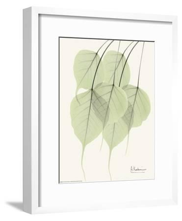 Cascading Bo Tree-Albert Koetsier-Framed Art Print