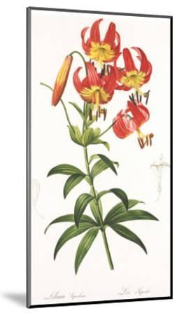 Redoute Lilium Superbum-Pierre-Joseph Redout?-Mounted Art Print