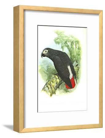 Grey Parrot no. 276--Framed Art Print