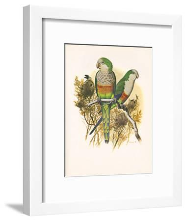 Monk Parakeet no. 461--Framed Art Print