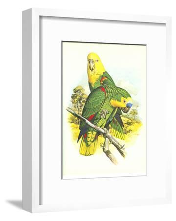 Blue Fronted Amazon no. 545--Framed Art Print