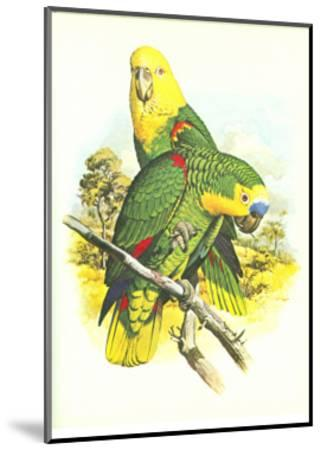 Blue Fronted Amazon no. 545--Mounted Art Print