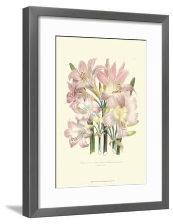 Lily Garden IV-Jane W^ Loudon-Framed Art Print