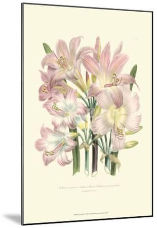 Lily Garden IV-Jane W^ Loudon-Mounted Art Print