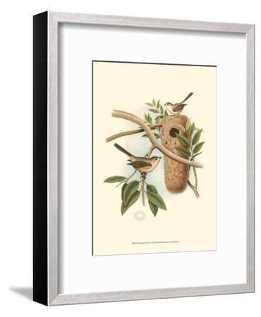 Titmouse & Nest--Framed Art Print