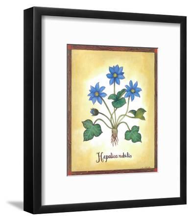 Hepatica Nobilis-Urpina-Framed Art Print
