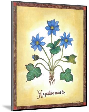 Hepatica Nobilis-Urpina-Mounted Art Print
