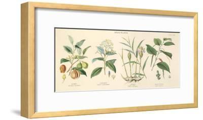Spice Plants I-William Rhind-Framed Art Print