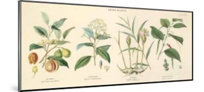Spice Plants I-William Rhind-Mounted Art Print