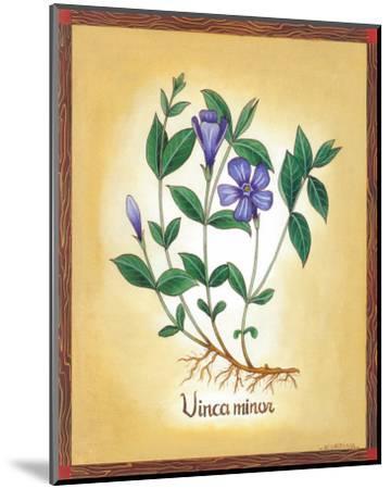 Vinca Minor-Urpina-Mounted Art Print