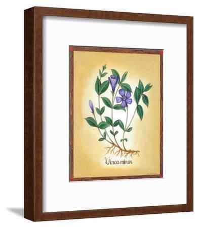 Vinca Minor-Urpina-Framed Art Print