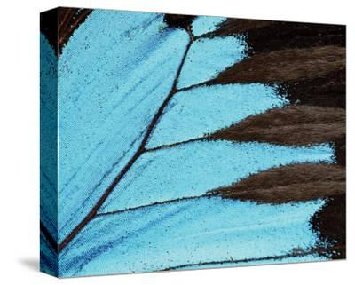 Ulysses-Danny Burk-Stretched Canvas Print