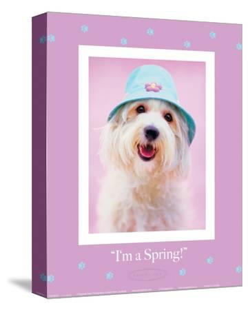I'm a Spring-Rachael Hale-Stretched Canvas Print