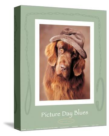 Picture Day Blues-Rachael Hale-Stretched Canvas Print