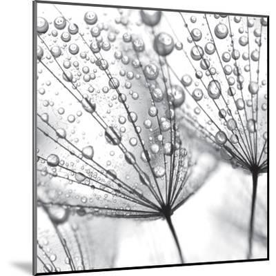 Delicate Wisps II--Mounted Art Print