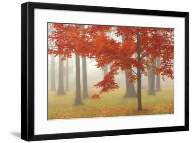 Autumn Mist II-Donna Geissler-Framed Art Print
