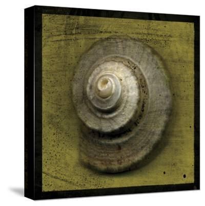 Whelk Crown-John Golden-Stretched Canvas Print