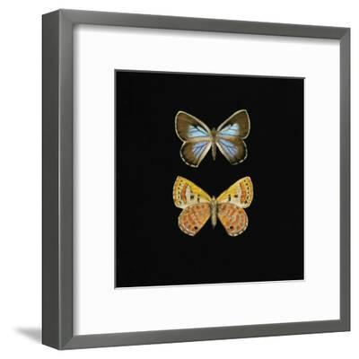 Pair of Butterflies on Black-Joanna Charlotte-Framed Art Print