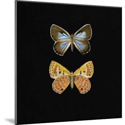 Pair of Butterflies on Black-Joanna Charlotte-Mounted Art Print
