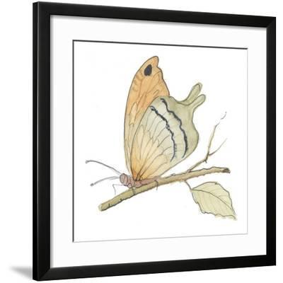 Butterfly in Orange-Peggy Abrams-Framed Art Print