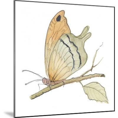 Butterfly in Orange-Peggy Abrams-Mounted Art Print