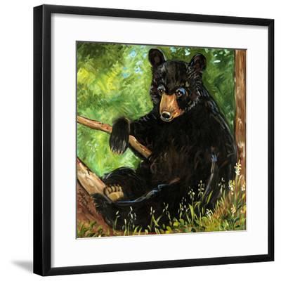 Baby Bear-Suzanne Etienne-Framed Art Print