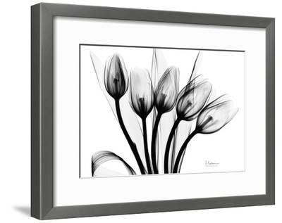 Early Tulips N Black and White-Albert Koetsier-Framed Art Print