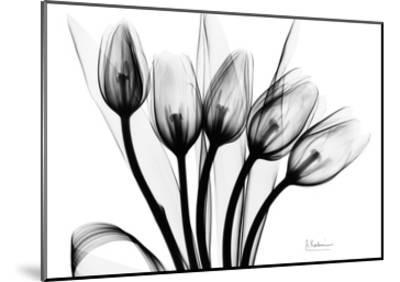 Early Tulips N Black and White-Albert Koetsier-Mounted Art Print