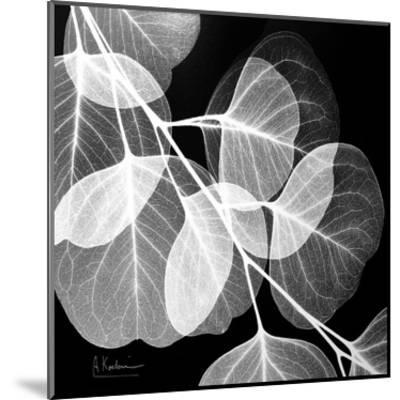 Eucalyptus Black and White-Albert Koetsier-Mounted Art Print