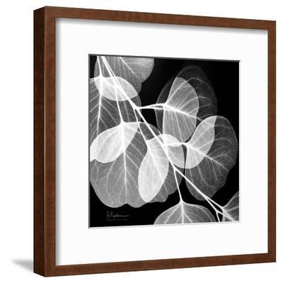 Eucalyptus Black and White-Albert Koetsier-Framed Art Print