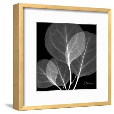 Eucalyptus Close Up Black and White-Albert Koetsier-Framed Art Print