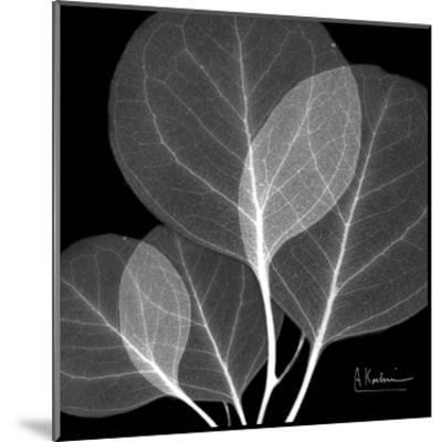 Eucalyptus Close Up Black and White-Albert Koetsier-Mounted Art Print