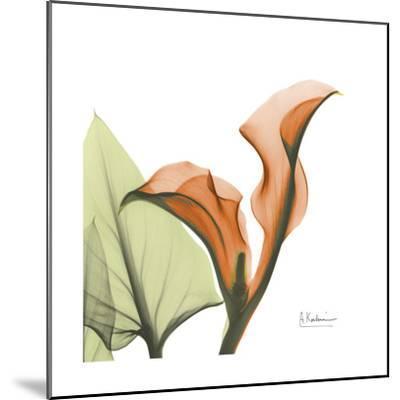 A Gift of Calla Lilies in Orange-Albert Koetsier-Mounted Art Print