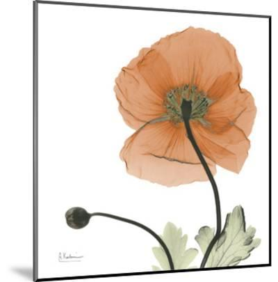 A Gift of Flowers in Orange-Albert Koetsier-Mounted Art Print