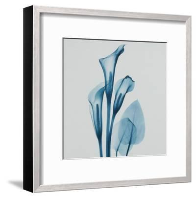 Calla Lilly Blue-Albert Koetsier-Framed Art Print
